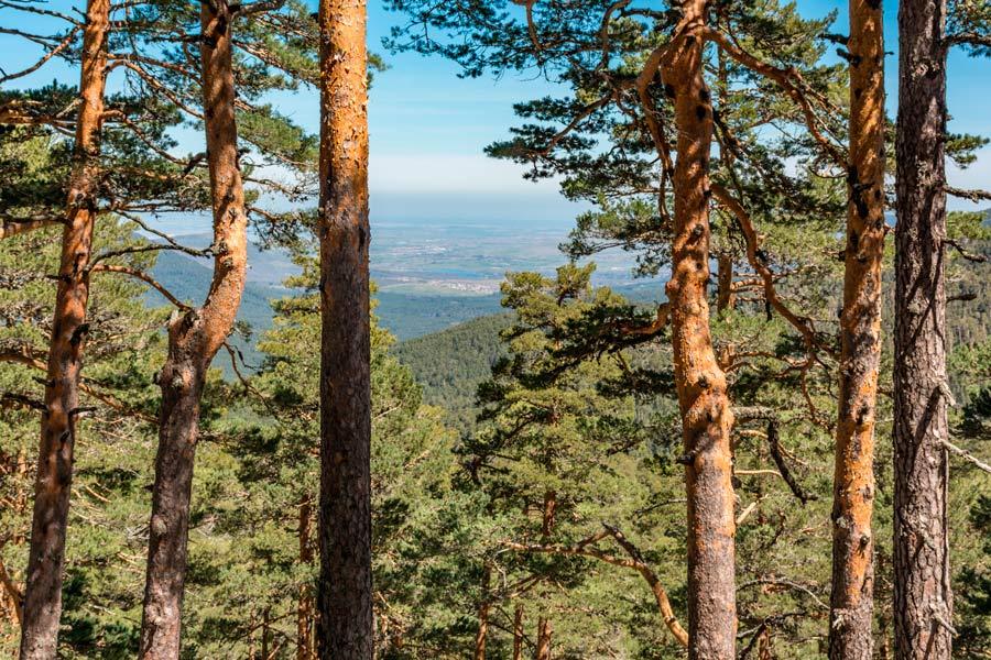 En la sierra de Madrid estamos rodeados de altos árboles con frescas sombras y aire limpio